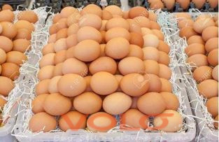 poultry jumbo fresh eggs